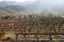 Vigne-Catalogne
